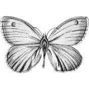 Plantilla de la mariposa 005