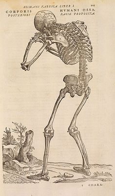 Illustration from De Humani Corporis Fabrica by Andreas Vesalius, first published in 1543