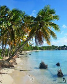 A la grande anse des Salines – à Sainte-Anne (Martinique).