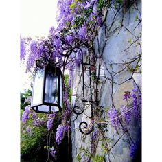 DreamWorld ❤ liked on Polyvore featuring backgrounds, pictures, photos, images and purple backgrounds