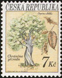 Stamp: Trees: Hornbeam (Carpinus betulus) (Czech Republic) (Protection of Nature) Mi:CZ 24,Yt:CZ 23,POF:CZ 24