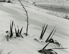 Mason Bay: A Natural Succession is a group of 16 photographs of the subtly humanised and isolated dune landscape of Mason Bay, Stewart Island. All images are selenium-toned silver gelatin prints, x 21 cm, from large-format negatives. Sky, Island, Landscape, Nature, Prints, Photography, Animals, Image, Heaven