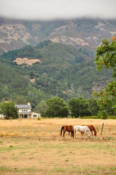 Foothills of Mount Saint Helena at the edge of Duffy's Napa Valley
