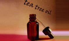 Árbol de té, planta medicinal antiséptica