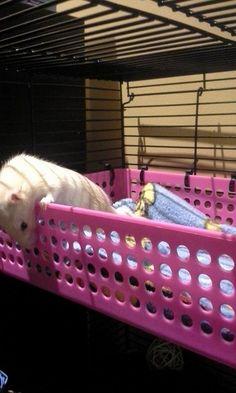 Rat cage level