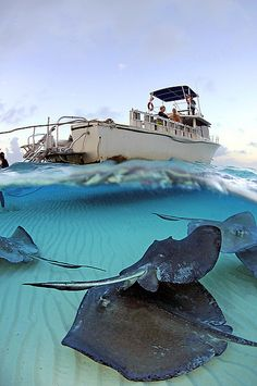 Just like the catamaran we took out to snorkel with the stingrays in the Cayman Islands! Can't wait to do it again!!