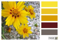 #colourinspiration #blogpost ~ Sunny September (b-day) Yellows ~ by #FASE13 ~ www.fase13.nl ~ Kleurinspiratie voor je interieur!