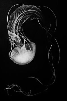 Jellyfish Art Print, White Charcoal Drawing, Ocean Art, Sea Creature, Jellyfish … - Everything About Charcoal Drawing and Sculpture Charcoal Art, White Charcoal, Charcoal Drawing, Black And White Art Drawing, Black Paper Drawing, White On Black Art, Jellyfish Drawing, Jellyfish Art, Art Scratchboard