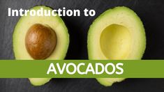 Welcome to Agriculture Academy, where we show you how to start a profitable business in Agriculture. When most people hear the word 'avocado' they think of a. Plant Nursery, Horticulture, Fun Facts, Avocado, Training, Vivarium, Lawyer, Garden Planning, Work Outs