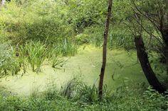 Resplendent in summer green #nature - http://anenglishwood.com/?p=9709
