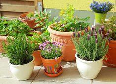 Best Herbs to Grow
