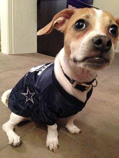 Dallas Cowboys furry friend!
