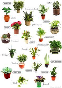Ervas aromáticas e jardins em casa – 11 dicas geniais