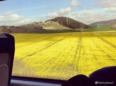 Paesaggio giallo dei Paesi Baschi - Fidelity Foto