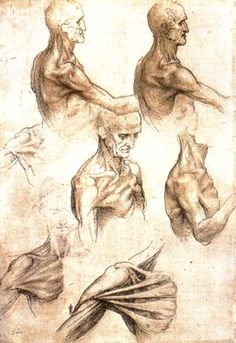Leonardo Da Vinci's Anatomy Drawings                                                                                                                                                                                 More