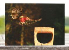 Robin flying to fork handle, robin greeting card, robin card, robin photo card, blank card, bird card, wildlife card, animal card, robin birthday card, Christmas card, flying robin, nature card, european robin, robin bird