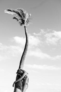 Palm tree hugger.