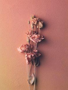 Owen Silverwood - Bloom