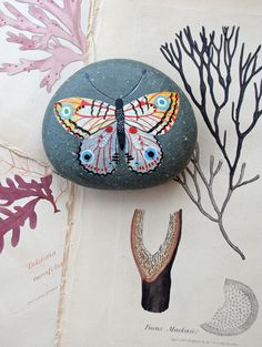 Butterfly stone | by Geninne