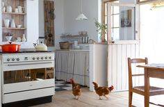 Chickens in the kitchen | Nicety