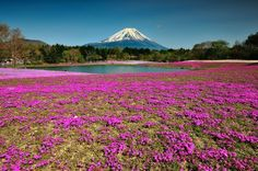 For breathtaking views of Mt. Fuji, head west to Minamitsuru District. A prime destination for hiking and climbing, Minamitsuru is also the location of the Arakura Sengen Shrine. In the spring, visit the Fuji Shibazakura Festival, a celebration at the base of the mountain featuring 800,000 pink moss phlox flowers.