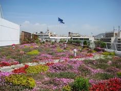 Stay on top of the Greenroof & Greenwall World by subscribing here: http://bit.ly/1HAbujW. Considered the most important square of modern Athens from both a ...