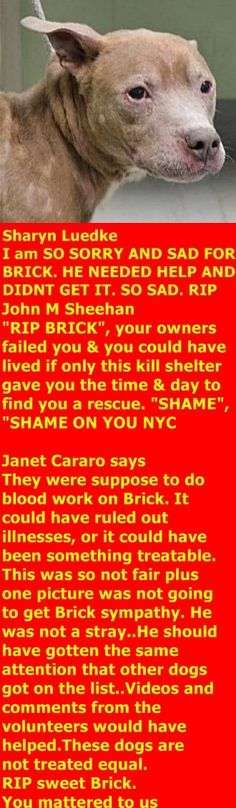 MURDERED 11/08/17 --- Hello, my name is Brick . My animal id is #11958. I am a male tan dog at the Brooklyn Animal Care Center. The shelter thinks I am about 7 years old. I came into the shelter as a owner surrender on 07-Nov-2017, with the surrender reason stated as person circumstance- cannot afford to care for. Bricks is at risk due to being diagnosed with neurologic disease. http://nycdogs.urgentpodr.org/brick-11958/