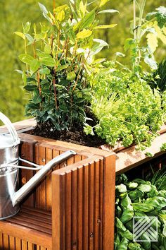 Ab in den Garten. Oder auf den Balkon. Gärtnern kannst Du überall. Hier ein paar nützliche Tipps und Tricks. #Garten #Balkon #Terrasse #Beet #Pflanzen #Kräuter #Gartenideen #Urbangardening Herbs, Urban Gardening, Plants, Patio, Garden Planning, Shade Perennials, Harvest, Tips And Tricks, Balcony