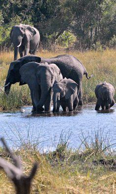 Chandogya Upanishad: ( ): The Chhandogya Upanishad : the tripod of Indian Cu. African Forest Elephant, Asian Elephant, Elephant Love, Animals Of The World, Animals And Pets, Baby Animals, Cute Animals, Elephants Photos, Save The Elephants