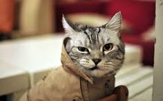 Everything is going to be be alright, Trenchcoat Cat is on the case. UPDATE: Tim Holt has the backstory on Trenchcoat Cat. Funny Cat Compilation, Funny Cat Memes, Funny Cat Videos, Funny Cat Pictures, Funny Cats, Funny Animals, Cute Animals, Angry Animals, Hilarious