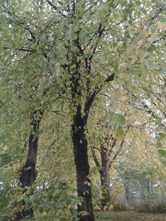 Leaves leaving the trees behind..