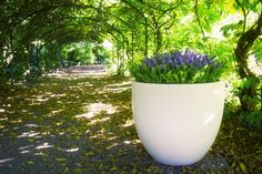 Bradwell planter is an elegant shaped planter which suits contemporary and traditional gardens alike. Bradwell Planter looks stunning in a granite effect Plastic Planters, Glass Planter, Metal Planters, Large Planters, Planters For Shade, Ral Colours, Street Furniture, Container Gardening, Most Beautiful Pictures