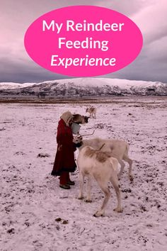 If you have ever wanted to see the Sami tribe in Norway, here's my experience of reindeer feeding and experiencing Sami culture in Norway. #samitribe #reindeerfeeding #samiculture #tromso #reindeer Lust For Life, Tromso, Reindeer, Norway, Globe, Culture, Adventure, Speech Balloon, Adventure Movies