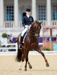 Damon Hill NRW - dressage horse ridden by Helen Langehanenberg (GER) Pretty Horses, Horse Love, Beautiful Horses, Horse Photos, Horse Pictures, Horse Dance, Dressage Horses, Horse Riding, Trail Riding