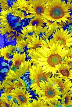 ~~Sunflowers in Tubingen by jefg99~~