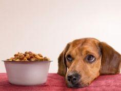 Regras na hora de comer ajudam a criar cão obediente e saudável