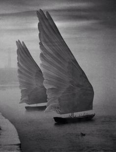 Sails of feathers.