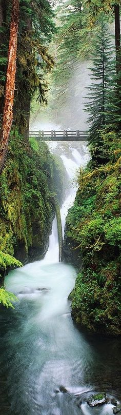 FOTINI MAVROMMATI - Google+ - Olimpic National Forest, Washington, USA