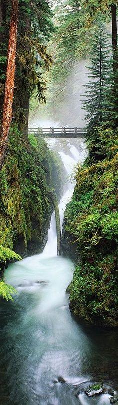 FOTINI MAVROMMATI - Google+ - Olimpic National Forest, Washington, USA