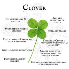 Plant Magic, Magic Herbs, Herbal Magic, Magic Spell Book, Witch Spell Book, Wicca Herbs, Nature Witch, Traditional Witchcraft, Three Leaf Clover