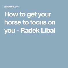 How to get your horse to focus on you - Radek Libal
