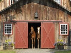 beautiful stable and it's residents