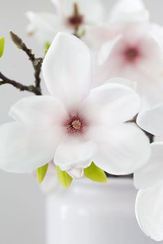 anetteshus-magnolia