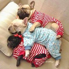 OMG!! Three Precious Pups♡♡♡
