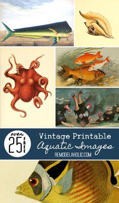 Over 25 Free Vintage Printable Aquatic Images Printable Art, Free Printables, Printable Vintage, Printable Stencils, Beach House Decor, Beach Houses, Beach Cottages, Beach Condo, Art Plastique