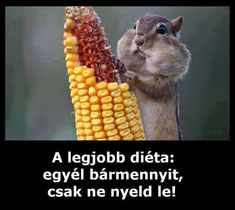 Funny Quotes, Funny Memes, Good Jokes, Puns, Picture Video, Haha, Animation, Minden, Smile