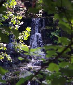 View of Virgin Falls from the trees. August 2011. Photo by Jalana