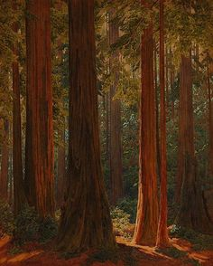 California redwood grove, signed and dated lower left: Widforss 1925, watercolor on paper under glass