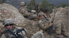 War dogs in Afghanistan