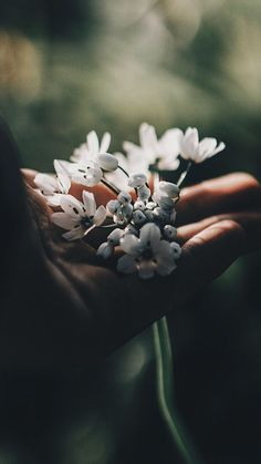 Object Photography, Dark Photography, Creative Photography, Wallpaper Iphone Cute, Aesthetic Iphone Wallpaper, Flower Wallpaper, Bff Drawings, Prophetic Art, Flower Landscape